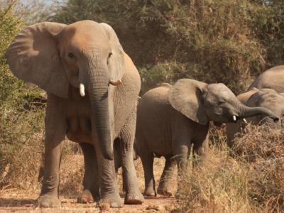 Elefanten in der Tuli Wilderness © Kalahari Calling